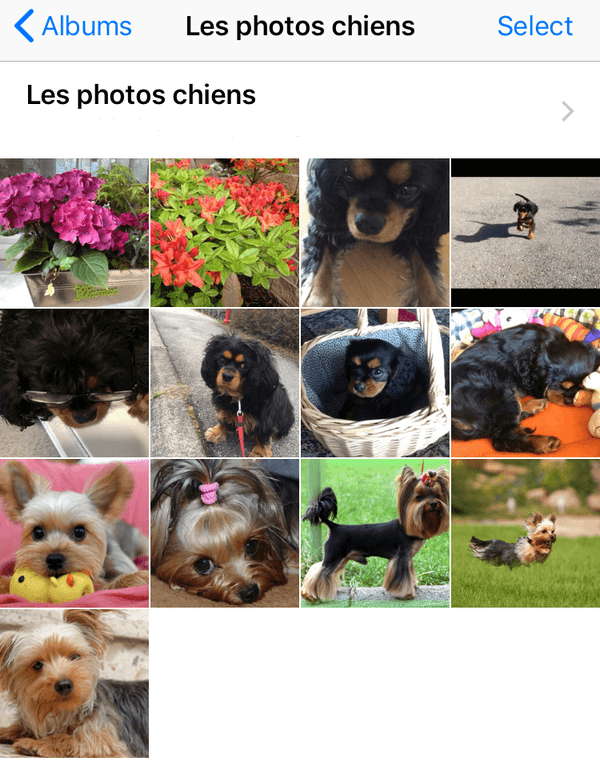 Les photos de android sur l'iphone