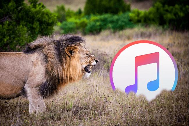 Problèmes iTunes